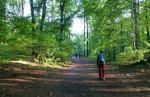 lesom na Kamzik