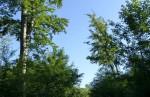 slniecko svieti ale pod stromami je celkom fajn